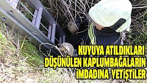 Mahsur Kalan 17 Kaplumbağayı İtfaiye Kurtardı