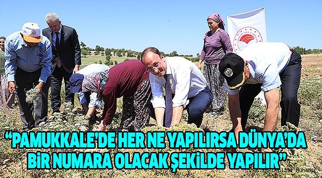 Başkan Örki Çiftçilerle İlk Kekik Hasadını Yaptı