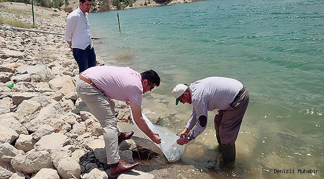 Denizli'de 105 Bin Adet Yavru Sazan Balığı Göletlere Bırakıldı