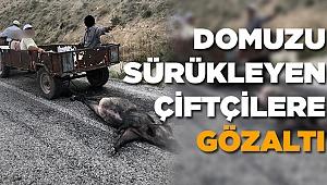 Ölü Domuzu Sürükleyen 4 Çiftçi Gözaltına Alındı