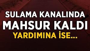 Sulama Kanalında Mahsur Kaldı!