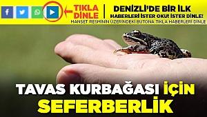 Dünyada sadece Tavas'ta görülen kurbağaya koruma seferberliği