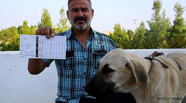 İşkence Edilen Köpek Sahiplerine Teslim Edildi