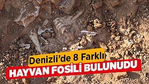 1,2 milyon ila 9 milyon yıl öncesine ait fosiller