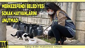 """SİZ EVDE KALIN, CAN DOSTLAR BİZE EMANET"""