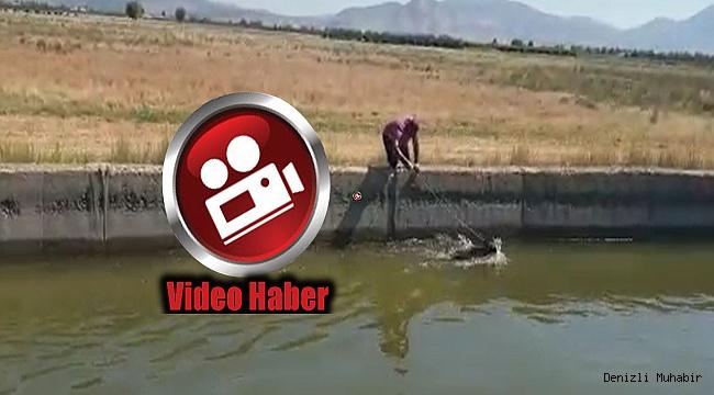 Denizli'de su kanalına düşen domuzu avcı kurtardı