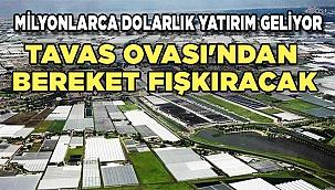 TAVAS TÜRKİYE'NİN HOLLANDASI OLABİLİR