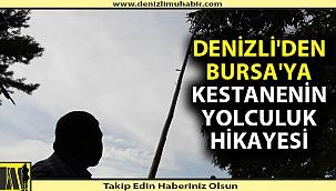 Bursa'nın kestanesi Denizli'den