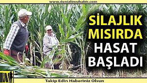 Silajlık mısırda hasat başladı