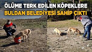 Ölüme terk edilen köpeklere Buldan Belediyesi sahip çıktı
