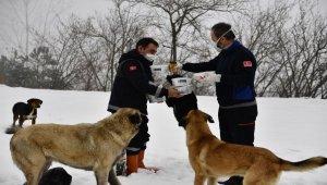 Osmangazi'den Uludağ'daki can dostlara yardım